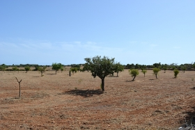Sold! Building plot in a quiet location between Llucmajor and Campos